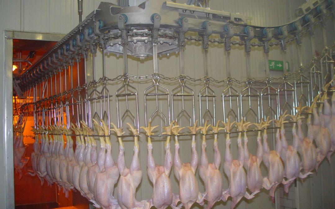 Rekordní zásoby masa vUSA