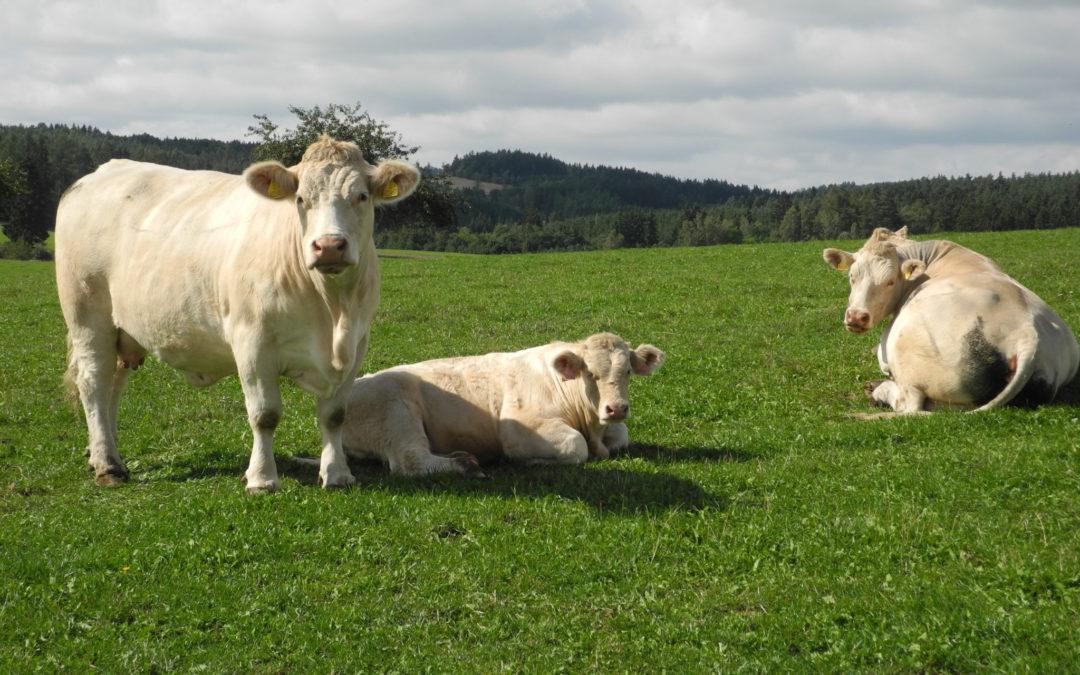 Nižší stavy dobytka vNěmecku